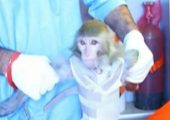 A photograph broadcast on Iranian TV as the monkey they reported launching into space (Credits: Press TV).