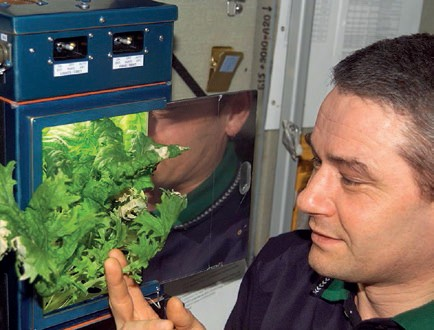Russian cosmonaut Valery Korzun monitors plant growth inside the Lada chamber on board the ISS. – Credits: NASA