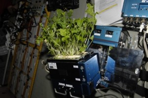 The Lada greenhouse, named after the Russian goddess of spring houses vegetables grown aboard the International Space Station. (Credits: NASA)